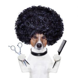 Cortapelos para Perros